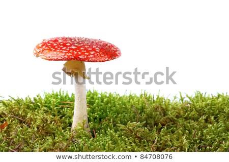 funghi · illustrazione · foresta · arte · droga · impianto - foto d'archivio © fresh_5265954