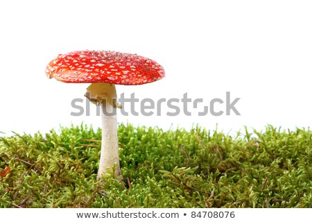 red mushroom amanita with grass on white background stock photo © fresh_5265954