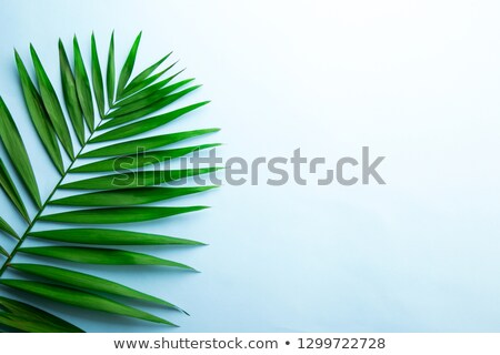 Beautiful composition of green leaves on a blue background with space for text. Flat lay Stock photo © artjazz