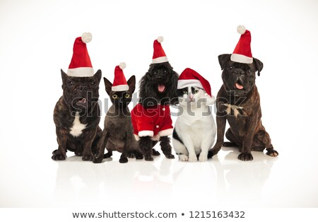 five cute santa cats and dogs sitting and panting Stock photo © feedough