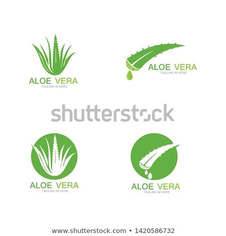 aloe vera icon logo vector sign element stock photo © blaskorizov
