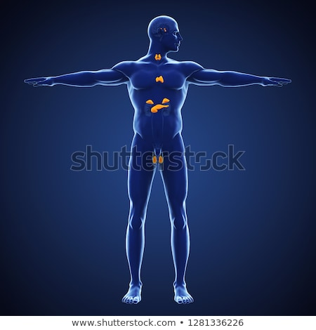 Klier anatomie icon geïsoleerd witte 3d illustration Stockfoto © Lightsource