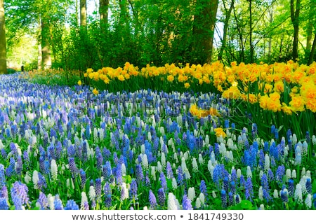 bluebell flowers river stock photo © neirfy