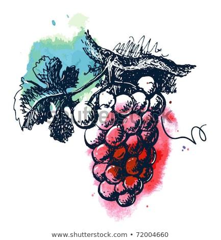 üzüm · ikon · gölge · şarap · dizayn · meyve - stok fotoğraf © sifis