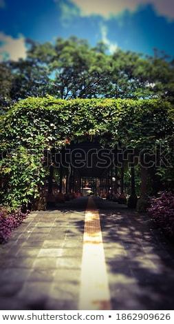 Botânico jardim bali jardins floresta Foto stock © Anna_Om