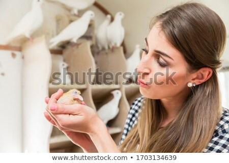 Nő tart galamb csirke padlás kéz Stock fotó © Kzenon