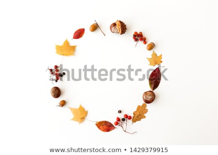 round frame of different dry fallen autumn leaves Stock photo © dolgachov