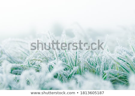 Mroźny trawy zimno spadek rano tekstury Zdjęcia stock © elenaphoto