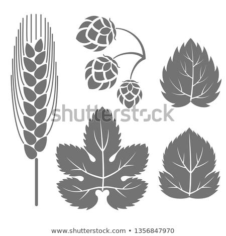 Hop leaf Stock photo © rbiedermann