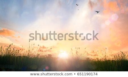 fog on meadow Stock photo © Aliftin