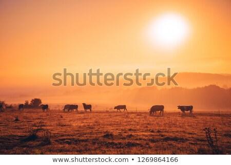 Scenic Grasslands and Farming Landscape Stock photo © feverpitch