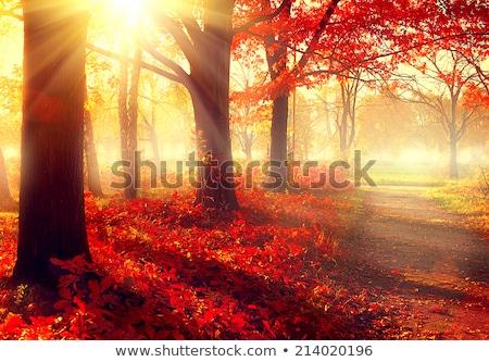 fall maple tree in foggy park stock photo © elenaphoto