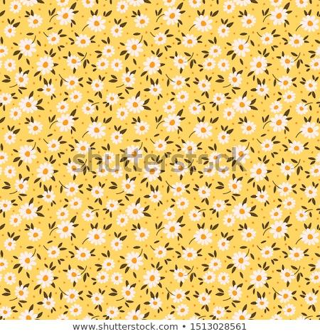 wild daisy Stock photo © taviphoto
