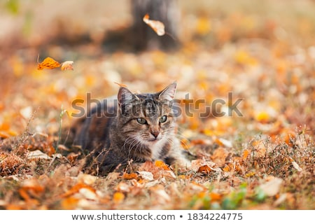 young kitten is hunting on green grass stock photo © ryhor
