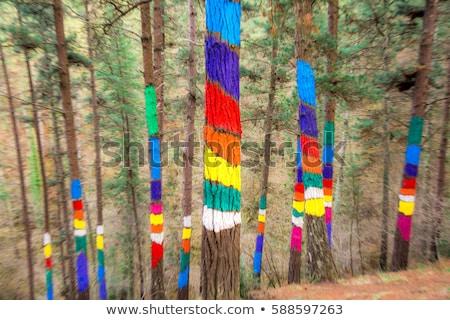 drzewo · antyczne · dąb · tradycyjny · ludzi · całość - zdjęcia stock © photosil