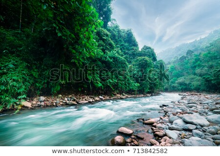 clear water running in the river stock photo © hanusst