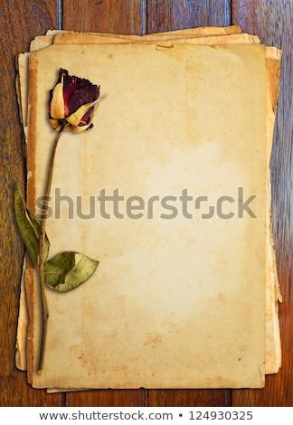 mutante · rosa · broto · primavera · casamento · abstrato - foto stock © nejron