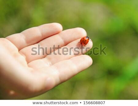 Katicabogár ül emberi ujj absztrakt természet Stock fotó © Nejron