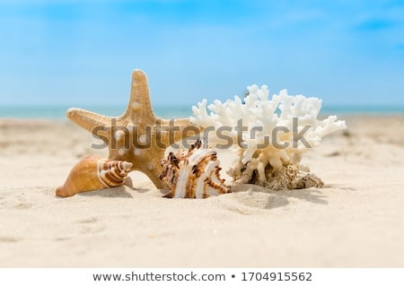 relaxing vacation concept background with seashell, umbrella and beach accessories Stock photo © denisgo