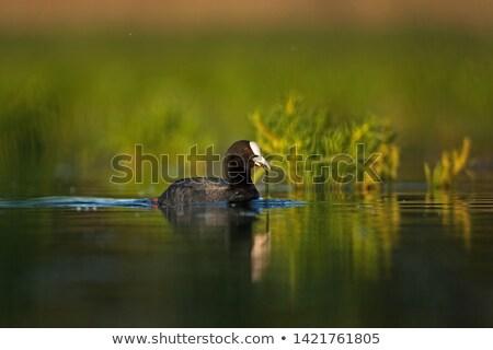 öreg · törött · csónak · csatorna · belváros · Amszterdam - stock fotó © arrxxx