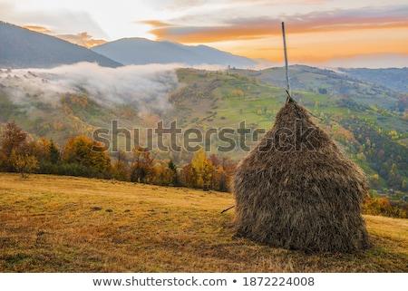 Oszałamiający Świt górskich krajobraz piękna przeciwmgielne Zdjęcia stock © Taiga