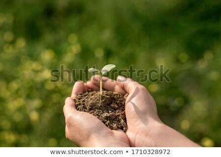 女性 手 草で覆われた 世界中 苗 ストックフォト © kjpargeter