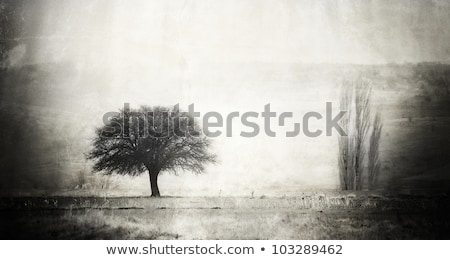 photo of tree silhouette countryside stock photo © zurijeta