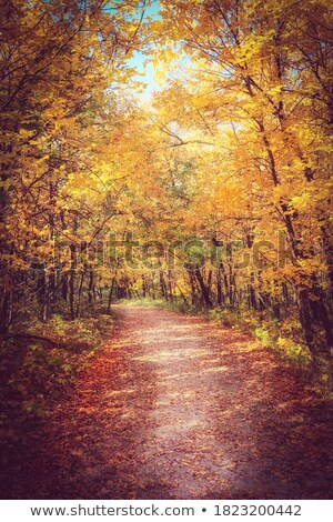 fall autumn colors trees manitoba canada stock photo © pictureguy