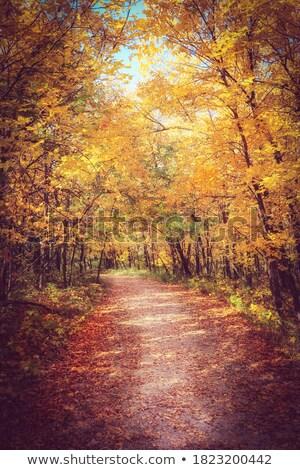 Fall Autumn colors trees Manitoba Canada Stock photo © pictureguy