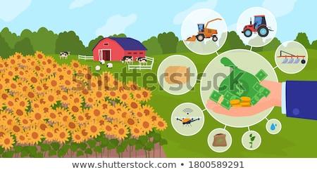 Farmer stacking coins, agricultural income Stock photo © stevanovicigor