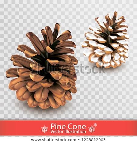Ataviar transparente Navidad pino cono Foto stock © romvo