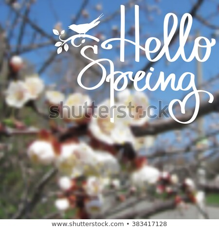greeting card cherry blossom flowers and hello spring text stock photo © margolana