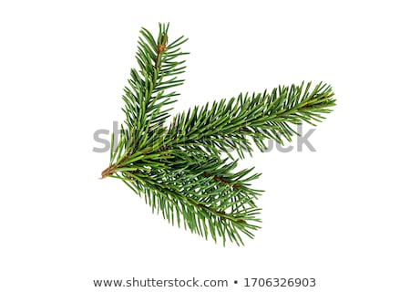 Stock photo: Close up view of a pine branch