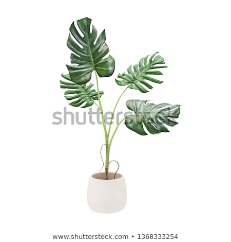 Potted Plant for Home with Leaves, Green Foliage Stock photo © robuart