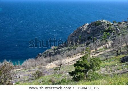 Croacia hermosa Resort playa agua mar Foto stock © borisb17