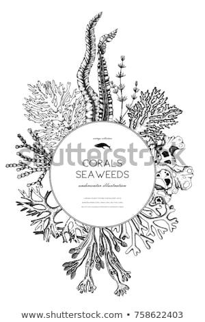 Grens sjabloon koraal onderwater illustratie water Stockfoto © bluering