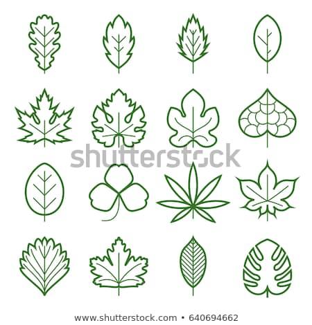 Hemp Plant Leaf Icon Vector Outline Illustration Stock photo © pikepicture