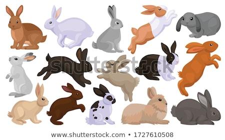 Kaninchen Aussehen Essen Karotte bunny Tiere Stock foto © lalito