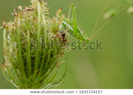 Sauterelle automne domaine vert escalade up Photo stock © zakaz