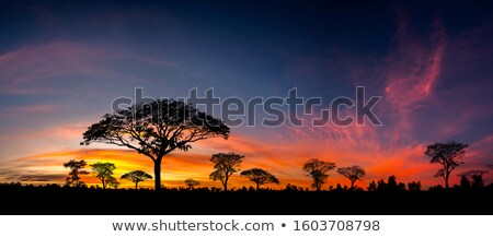Afrika · safari · gün · batımı · güneş · mesafe · arkasında - stok fotoğraf © ajlber