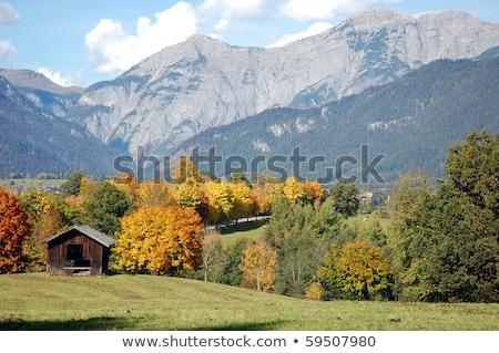 ősz · alsó · Ausztria · növény · szőlő · szőlőskert - stock fotó © haraldmuc
