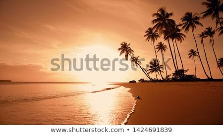 warm · zonsondergang · zonlicht · najaar · bos · licht - stockfoto © tannjuska