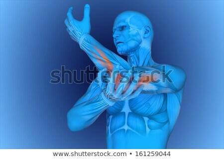 şeffaf dijital vücut omuz ağrısı mavi kas Stok fotoğraf © wavebreak_media