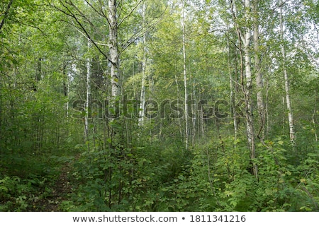 Stock photo: Dense undergrowth