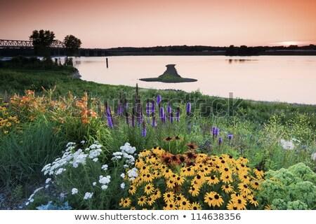 Ok ada Mississipi sınır Illinois Iowa Stok fotoğraf © benkrut