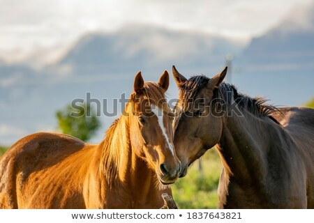 Intimacy. Couple of Beloveds kissing and Hugging. Closeness Stock photo © gromovataya
