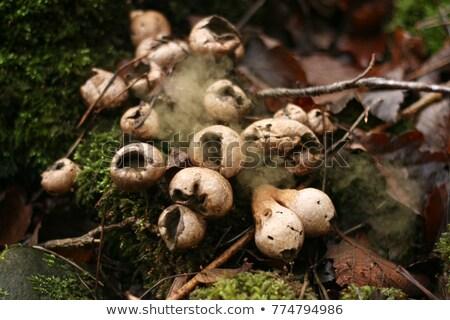 Fungo crescente sussex giz natureza cogumelo Foto stock © suerob