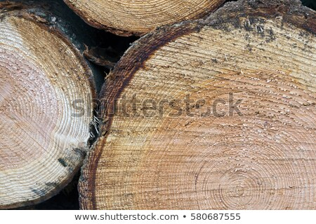 Stacked Logs with a Norway Spruce Tree Stock photo © tainasohlman