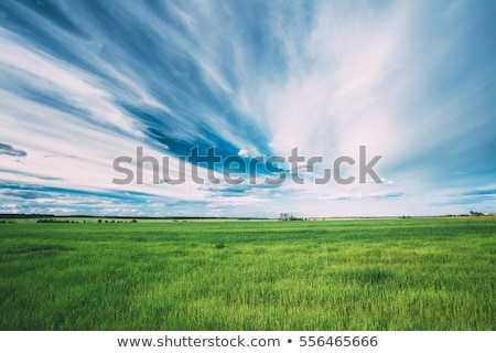 dramatic sky and green field Stock photo © mycola
