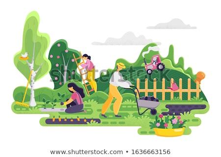 tractor in flower garden stock photo © stoonn